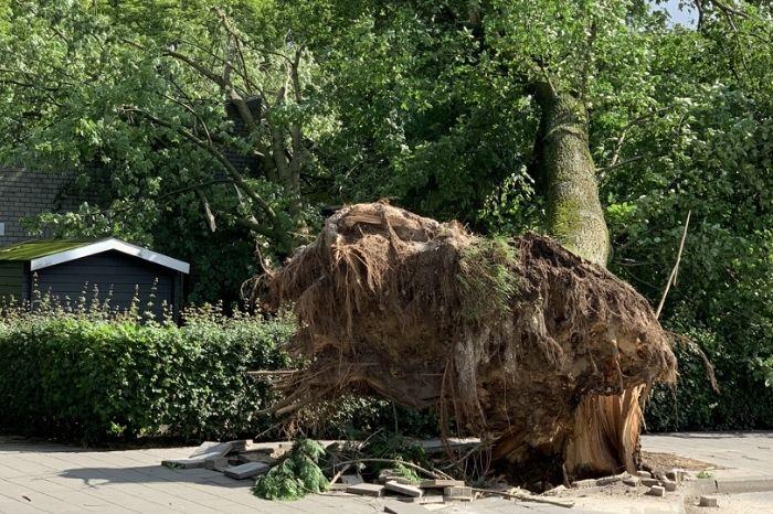 Welke stormschade is verzekerd? VBA Sint Odiliënberg